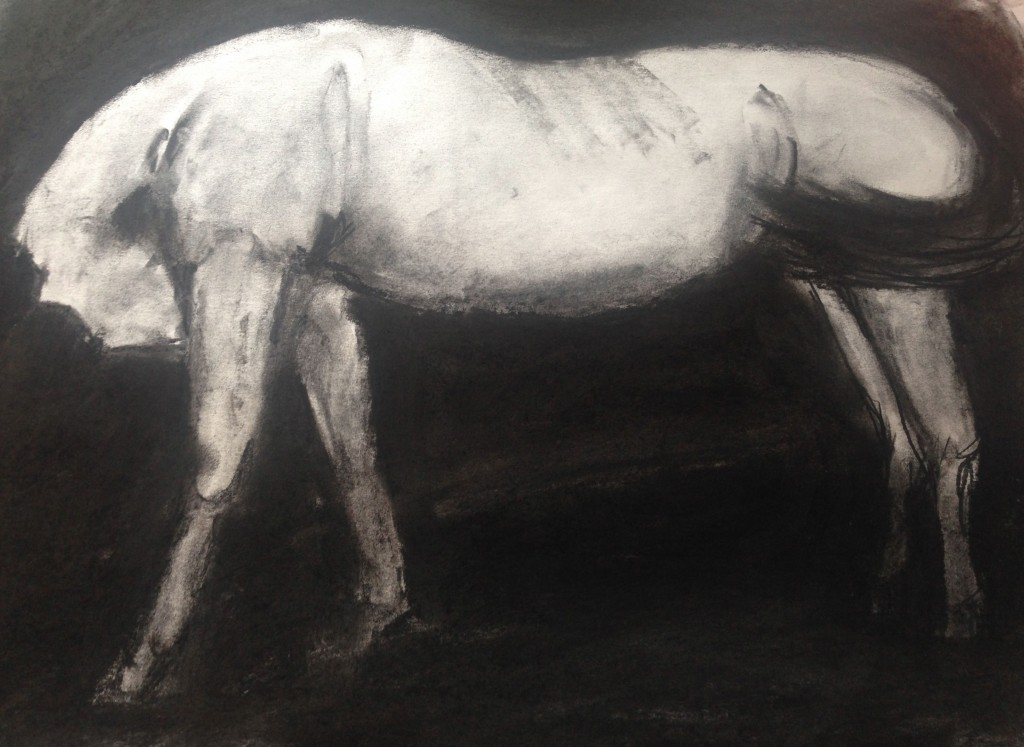 """horse portrait"" 18 x 25 charcoal on paper 2016"