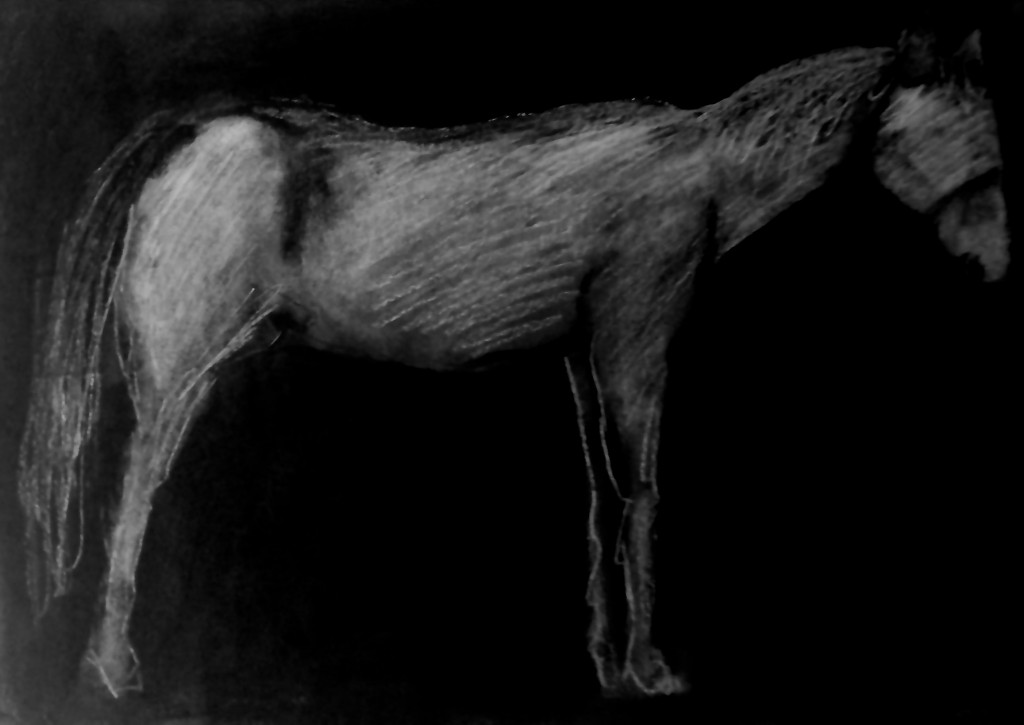 """blind horse portrait"" 18 x 25 charcoal on paper 2016"